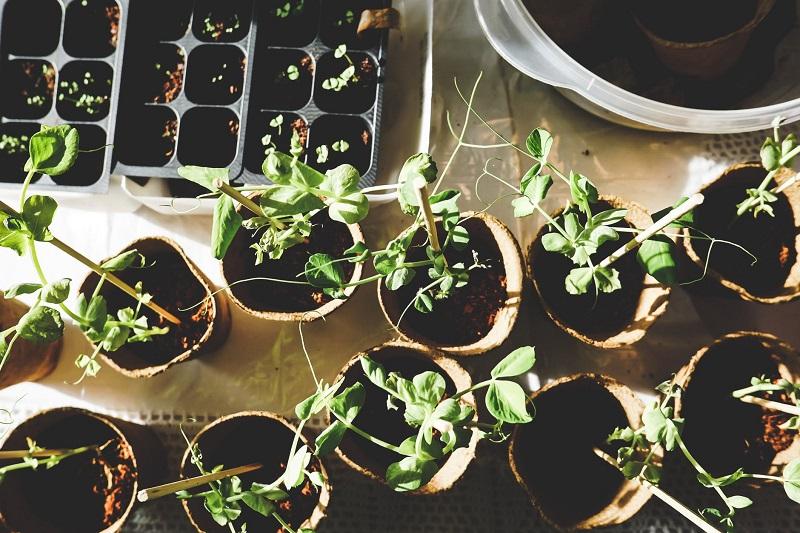 potting-bench-seedlings
